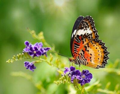 Carta da parati Farfalla su un fiore viola