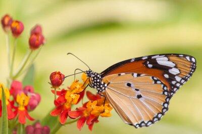 Carta da parati Farfalla sul fiore