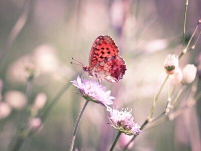 Carta da parati Farfalla sul fiore di campo