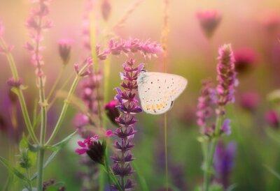Carta da parati Farfalla sul fiore selvatico