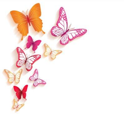 Carta da parati Farfalle colorate realistici isolati per la primavera