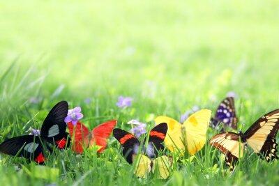 Carta da parati Farfalle esotiche che incorniciano sfondo verde erba