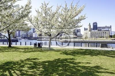 87168bc6a611 Carta da parati fila di alberi di ciliegio in fiore a Yokohama porto