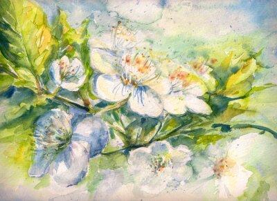 Carta da parati Filiale di fioritura della acquerello ciliegio verniciato