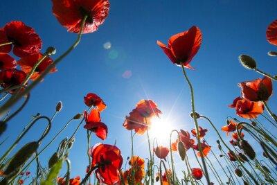 Carta da parati Fiore del papavero