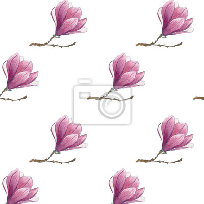 Carta Da Parati Fiore Di Magnolia Rosa Isolato Su Sfondo Bianco Seamless Pattern