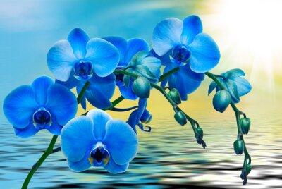 Carta da parati fiore di orchidea da vicino