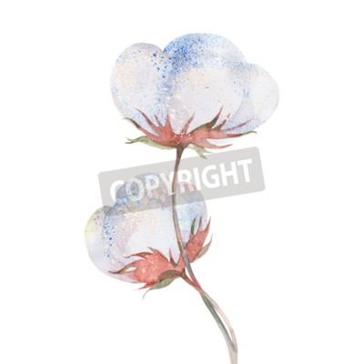 43a3101fe8 Carta da parati: Fiore pianta di cotone, illustrazione acquerello su sfondo  bianco
