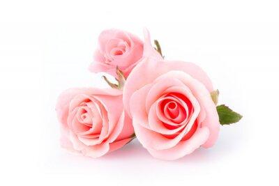 Carta da parati fiore rosa rosa su sfondo bianco