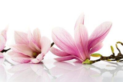 Carta da parati fiori