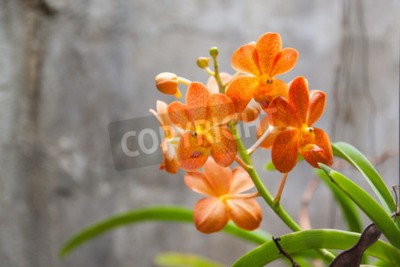 Carta da parati Fiori d'orchide arancioni