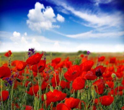 Carta da parati fiori di campo estivo