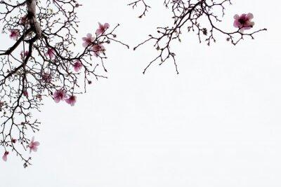 Carta da parati Fiori di magnolia giapponese su sfondo bianco