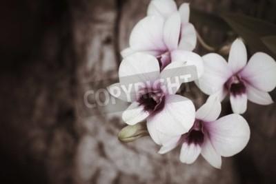 Carta da parati Fiori di orchidee vintage
