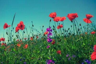 Carta da parati fiori di papaveri contro il cielo