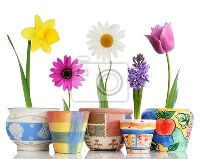 Fiori Di Ceramica.Carta Da Parati Fiori Di Primavera Colorata In Contenitori Di Ceramica Divertenti