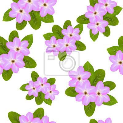 Fiori Di Primavera Rosa Su Sfondo Bianco Senza Soluzione Di