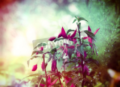 Carta da parati fiori fucsia graziosi su sfondo giardino estivo vicino tonica