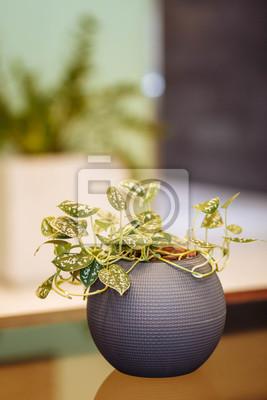 Fiori In Vaso Tondo Grigio Foglie Verde Variegato Giallo Bianco