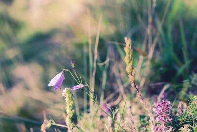 Carta da parati fiori selvatici