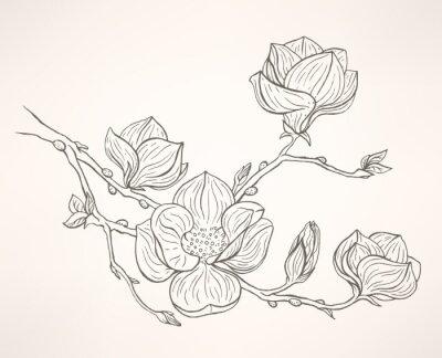 Carta da parati fioritura magnolia
