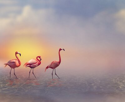 Carta da parati Flamingo Birds