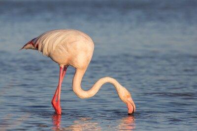 Carta da parati Flamingo, Camargue, Francia