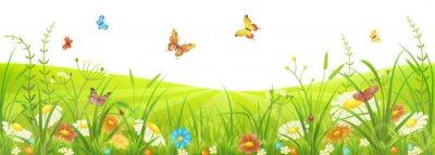 Carta da parati Floral prato estate o in primavera con erba verde, fiori e farfalle
