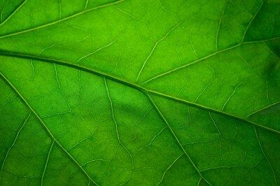 Carta da parati Foglia verde