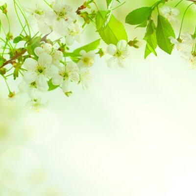 Carta da parati Foglie verdi, bellissima natura sfondo