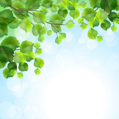 Carta da parati Foglie verdi rami di albero vettore sfondo