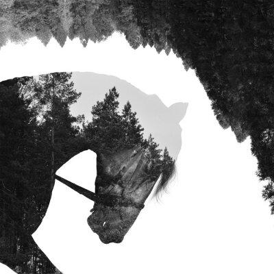 Carta da parati foresta di abeti all'interno del cavallo nell'arte, multiexposition