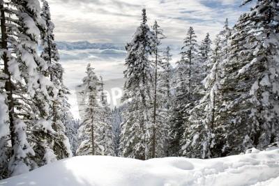 Carta da parati Foresta di inverno nelle Alpi vicino a Kufstein in Austria, Europa.