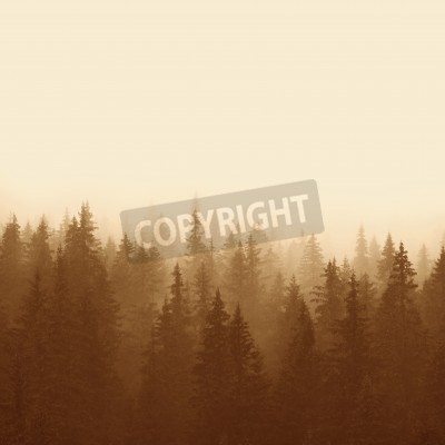 Carta da parati foresta di pini in montagna con la nebbia