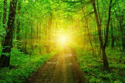 Carta da parati Foresta e sole