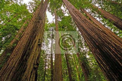 Carta Da Parati Foresta Tropicale : Foresta giants nella foresta pluviale carta da parati u2022 carte da
