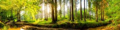 Carta da parati foresta idilliaco con torrente all'alba