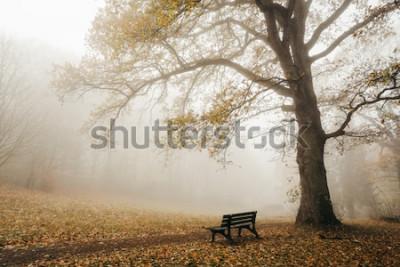 Carta da parati Foresta in autunno umore con nebbia e sole