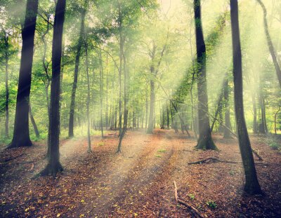 Carta da parati foresta magica in myst con raggio di sole