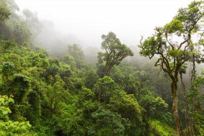Carta da parati foresta naturale a Magoebaskloof