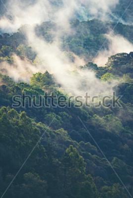 Carta da parati Foresta nebbiosa in movimento