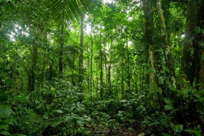 Carta da parati Foresta pluviale Paesaggio, Amazon