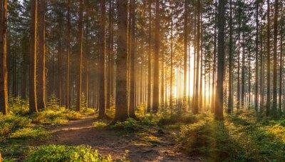 Carta da parati Foresta silenziosa in primavera con splendidi raggi di sole splendente
