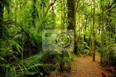 Carta Da Parati Foresta Tropicale : Foresta tropicale carta da parati u carte da parati jolly giungle