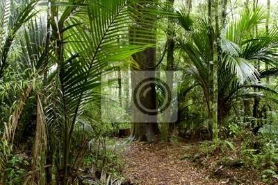 Carta Da Parati Foresta Tropicale : Foresta tropicale carta da parati u carte da parati a distanza