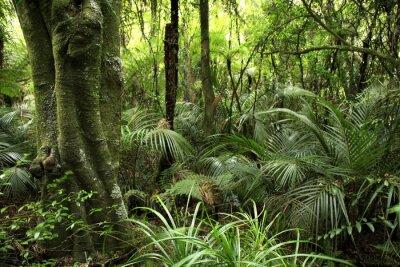 Carta Da Parati Foresta Tropicale : Foresta tropicale carta da parati u carte da parati foresta