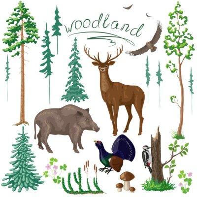 Carta da parati Forestale Piante e Animali Set
