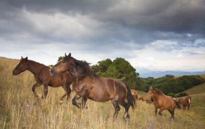 Carta da parati Foto di cavalli al galoppo
