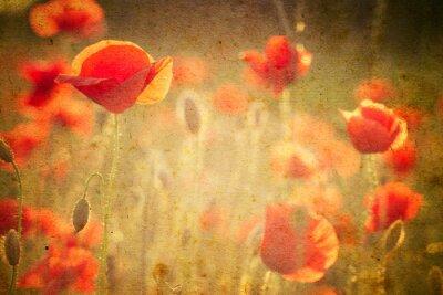 Carta da parati Foto di una papaveri fiori