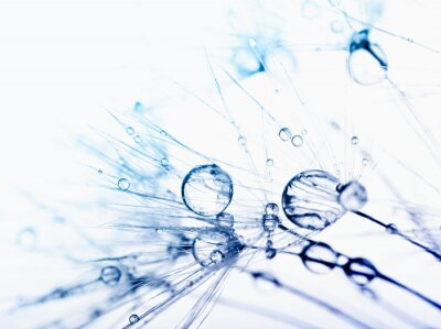 Carta da parati Foto macro astratto di semi di piante con gocce d'acqua.